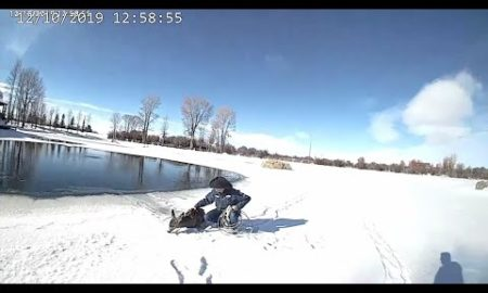 AP: Deputies use lasso to rescue deer from frozen pond